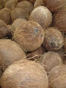 coconuts-FI 2ndC