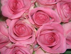 roses-2-FI 2ndC